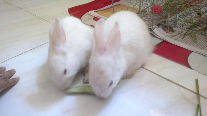 Late Dustu and Misti - two baby bunnies that filled my life with joy this 2014